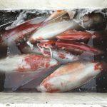 9月20日 ソデイカ漁
